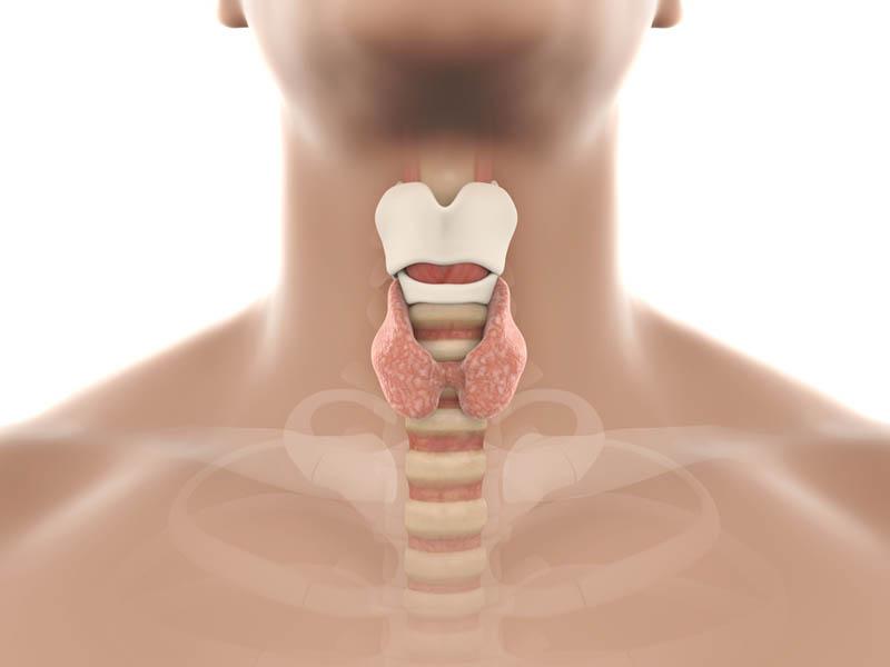 עבודת בוגרים: הטיפול הביואורגונומי בתת פעילות בלוטת התריס – רונית שבת